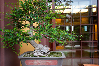 Bonsai at Nan Lian Garden_5759 | by hkoons