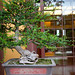 Bonsai at Nan Lian Garden_5759