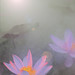 Lotus Flower Surreal Series: DD0A9721-1-1000