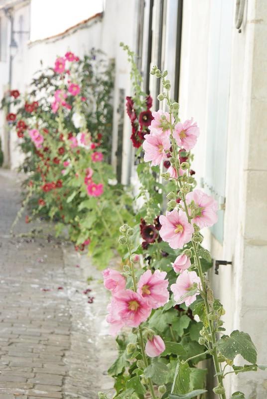 fleurs de ré