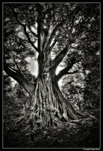 MysTree | by Geoff Trotter
