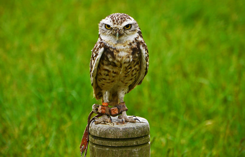 LITTLE OWL SAYS...... | by craftedfromtheheart