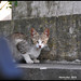 Stray Cats in Lisbon Cemetery Need Your Help - Lisbon N9174e