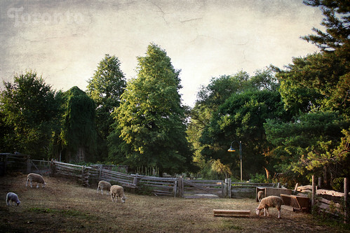 A Scenic Corner of Riverdale Farm. Pastoral July | by Katrin Ray