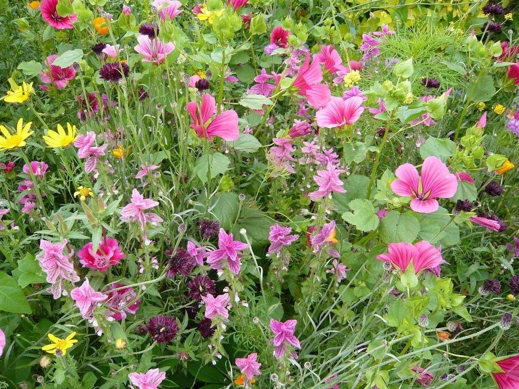 tapis de fleurs la ville de lambersart a plant en bordure flickr. Black Bedroom Furniture Sets. Home Design Ideas