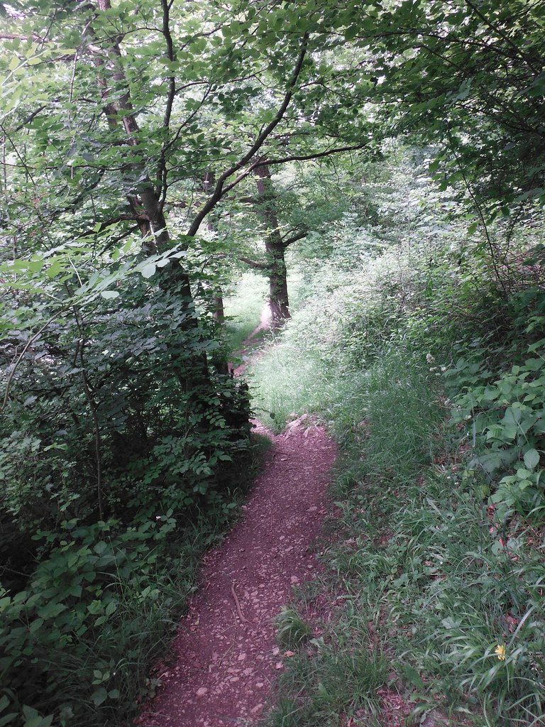 Grass Woods 11