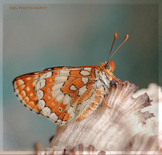 Mil mariposas.... | by .... belargcastel ....