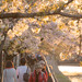 KYOTO DAYS ~ Okazaki Canal ~ 岡崎疏水
