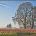 A Field In Bloom