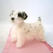 sealyham terrier 067
