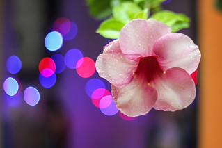Hibiscus and Flickr colors [EXPLORE] | by eit1mx