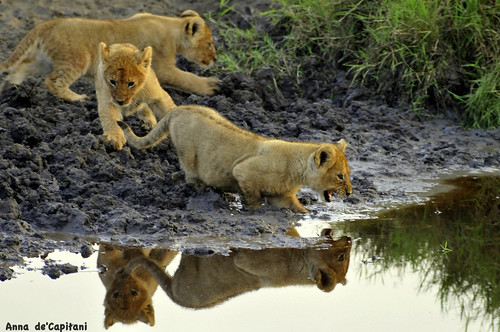 """mom, I don't like water.....!!!""! 