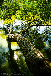 Big Tree Reflecting | by The Lazy Photographr