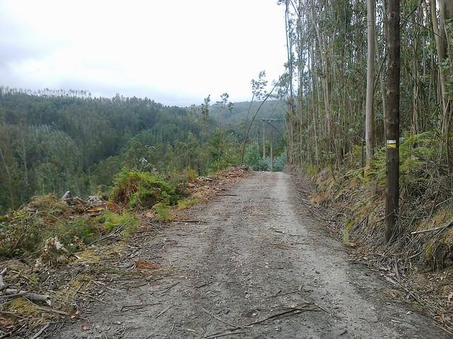 Pista forestal en el PR-G 35 O Río dos Dous Nomes