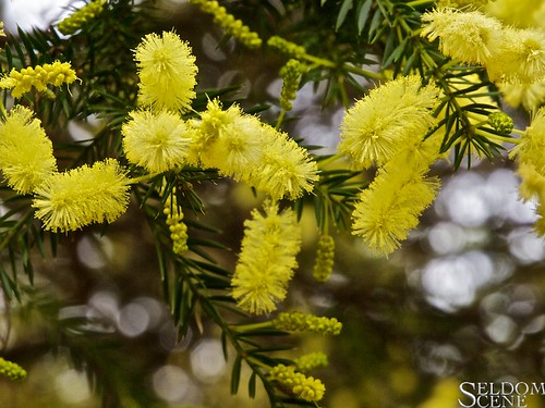 Curiously yellow | by Seldom Scene Photography