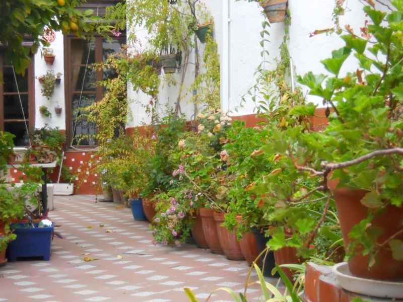 Patio de los limoneros 2 fotos patio andaluz con - Fotos patio andaluz ...