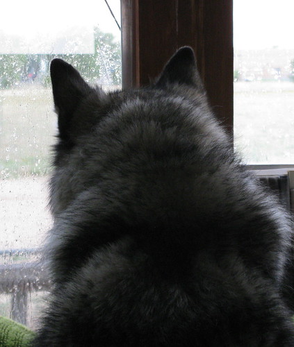 Luka looks out at the rain | by kafski
