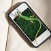 Lizard on iPhone