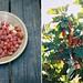 raspberry currant jam