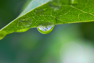 My First Water Drop Macro | by Bob Decker