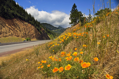 Along the Columbia Hwy | by ScenicScapes