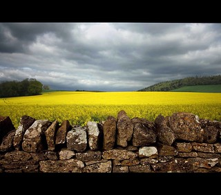 Sunlit Rapeseed | by Martyn.Smith.