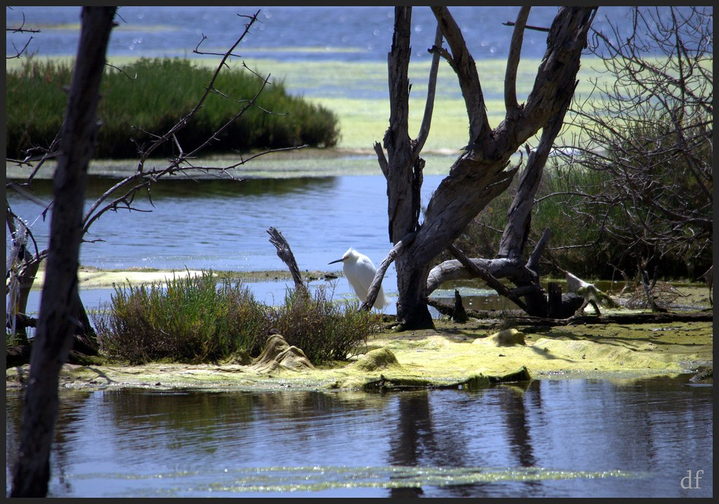 a report on the preservation of the wetlands of bolsa chica Sensitive bolsa chica wetlands preserve near huntington beach  up every  month to give a progress report on the bags instead of morales.