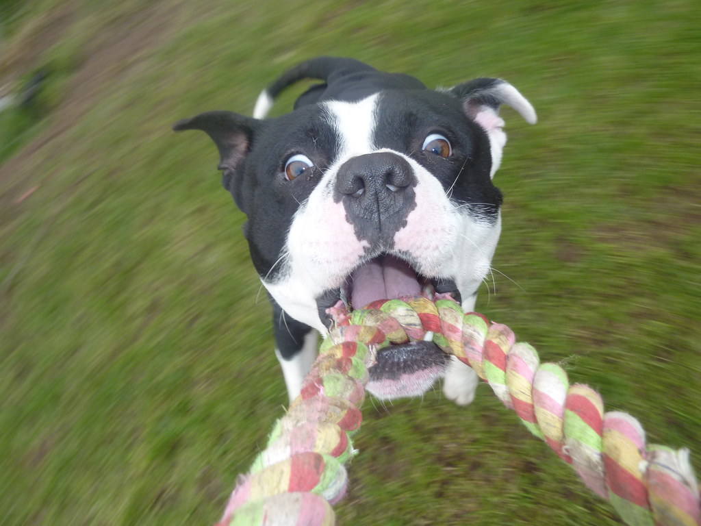 Happy Tails Dog Kennel Mount Forest