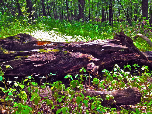 Pleasant Valley Park Fallen Tree | by Christian Montone