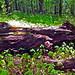 Pleasant Valley Park Fallen Tree