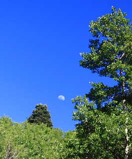 Moon Over Hyde Park Forest Road (about 10,000 ft elevation) - Northeast of Santa Fe, New Mexico | by danjdavis