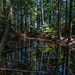 Reflections in the Woods, Bowen Island