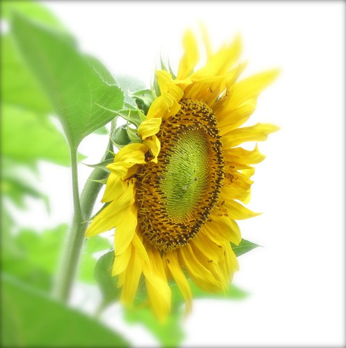... au coeur du soleil / ...the heart of the sun / | by anne marie bouyssou