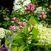 A Cranford Garden...