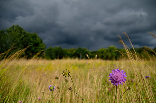 Stormfront sneaking up on pretty flower, Hillerød, Denmark | by Mads71