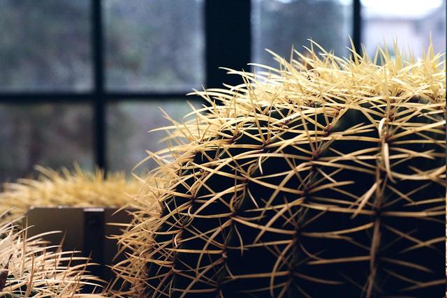 Serra piante grasse flickr photo sharing for Serra piante grasse