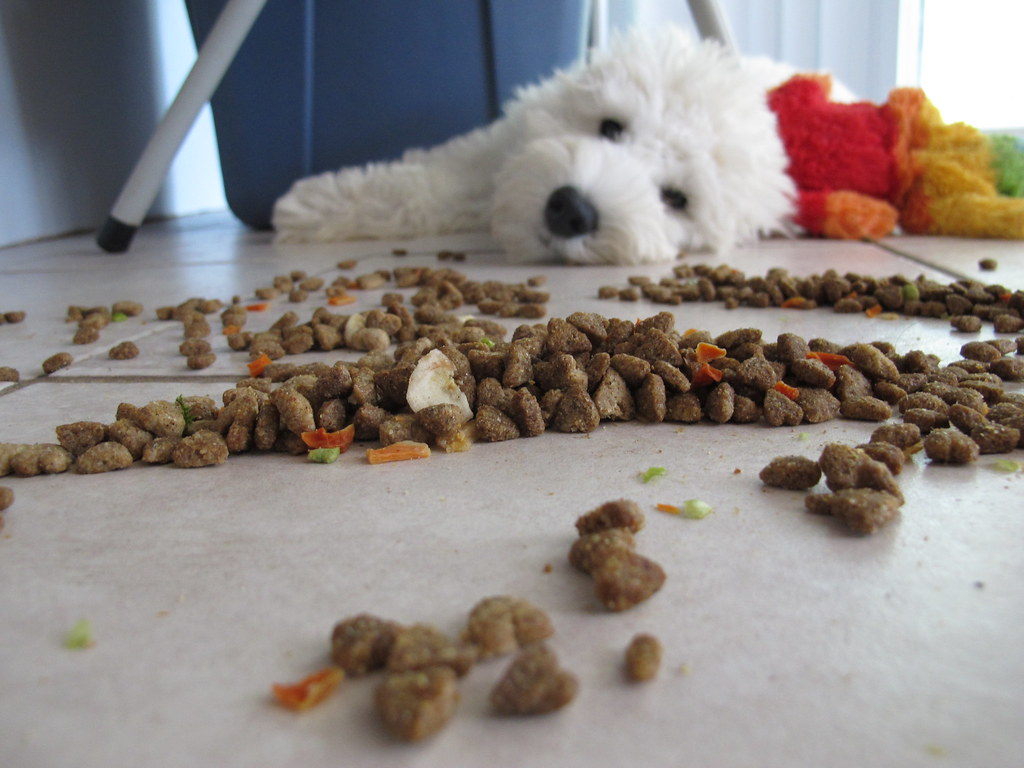Dog Played With His Food Not Hungry Just Bored