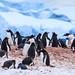 Antarctica-111123-389