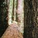 original balance beam—Siouxon Falls