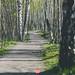 129/365 Birch Alley
