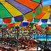 Parasol Paradise