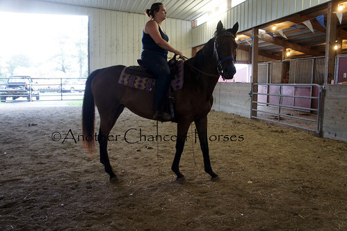DSC04496 copy | by Another Chance 4 Horses, Inc.