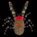 Red-faced squat-lobster (Galathea amamiensis) from Bali