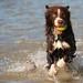 Fetch & Splash