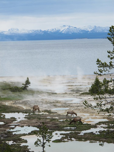 Yellowstone: I can't believe this scene existed in nature | by mormolyke