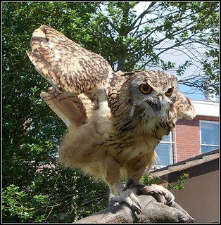 Indian Eagle Owl , | by ** Janets Photos **