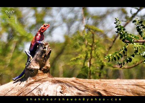 Spiderman in Action~Neat Colored Rainbow Lizard | by Shahnoor Shawon ( শাহ্‌নূর শা