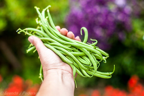 My First Green Beans | by Culinary Fool