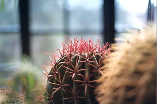 Serra piante grasse pentax me super flickr for Serra piante grasse