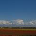 Bollenvelden Noord Holland